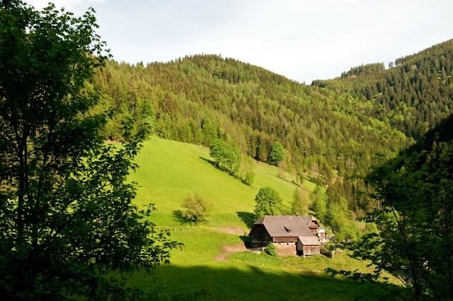foto: bossen in Stiermarken